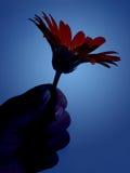 De bloem van de holding - blauw Stock Foto's