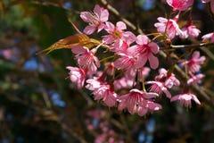 De bloem van de Hoogheidtijger Royalty-vrije Stock Afbeeldingen