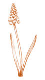 De bloem van de hyacint. royalty-vrije illustratie