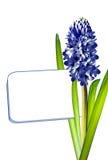 De bloem van de hyacint Royalty-vrije Stock Afbeelding