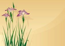 De bloem van de iris Stock Afbeeldingen