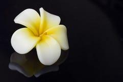 De bloem van de kaars op zwarte Stock Foto's