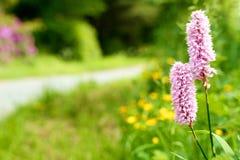 De bloem van de kant van de weg Royalty-vrije Stock Afbeeldingen