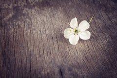 De bloem van de kersenbloesem op oude houten lijst Stock Foto