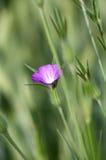 De bloem van de kokkel Stock Foto