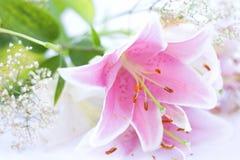 De bloem van de lelie Stock Foto