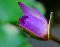 De Bloem van de lelie stock afbeelding