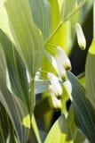 De bloem van de lente royalty-vrije stock foto
