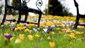 De bloem van de lente royalty-vrije stock foto's