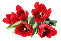 De bloem van de lente - boeket van rode tulpen Royalty-vrije Stock Afbeeldingen