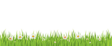 De bloem van de lente en gras naadloze achtergrond Stock Afbeeldingen