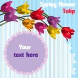 De bloem van de lente Tulp Royalty-vrije Stock Foto
