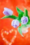 De bloem van de Lente van de tulp op rood en schittert Royalty-vrije Stock Afbeeldingen