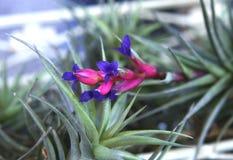 De bloem van de luchtinstallatie Royalty-vrije Stock Afbeeldingen