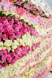 De bloem van de muur Royalty-vrije Stock Afbeelding