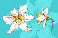 De bloem van de narcissenlente Royalty-vrije Stock Afbeelding