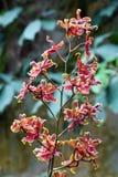 De bloem van de orchidee Royalty-vrije Stock Foto