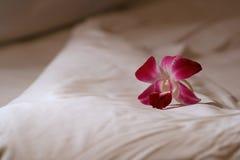 De bloem van de orchidee op bed Royalty-vrije Stock Foto