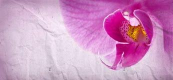 De bloem van de orchidee op verfrommeld document Royalty-vrije Stock Afbeeldingen