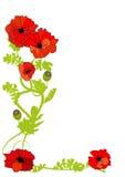 De bloem van de papaver stock illustratie
