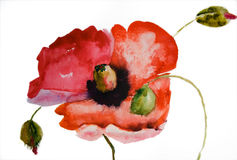 De bloem van de Papaver van de waterverf Stock Afbeeldingen