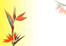 De bloem van de paradijsvogel Stock Afbeeldingen