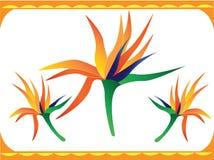 De bloem van de paradijsvogel Royalty-vrije Stock Fotografie