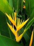 De bloem van de paradijsvogel Royalty-vrije Stock Afbeelding