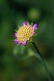 De bloem van de pastelkleurzomer in roze en geel met onscherpe achtergrond Royalty-vrije Stock Foto