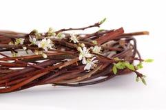 De bloem van de pruim Royalty-vrije Stock Foto