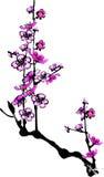De bloem van de pruim stock foto's