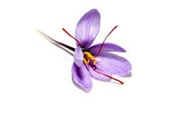 De bloem van de saffraan stock foto's