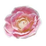 De bloem van de stof Stock Afbeeldingen