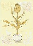 De bloem van de tulp Stock Fotografie