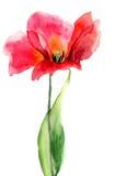 De bloem van de tulp Stock Foto