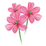 De bloem van de tulpenwaterverf Royalty-vrije Stock Afbeelding