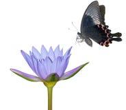 De bloem van de vlinder en van de lelie Stock Fotografie