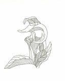 De bloem van de vredeslelie royalty-vrije illustratie