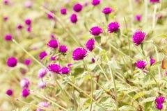 De bloem van de vrijgezelknoop royalty-vrije stock foto