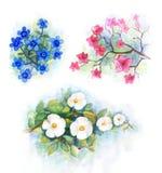 De bloem van de waterverf Royalty-vrije Stock Foto's