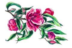 De bloem van de waterverfcamelia Stock Foto's