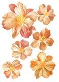 De bloem van de waterverfillustratie Stock Afbeeldingen