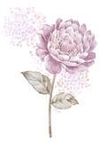 De bloem van de waterverfillustratie op eenvoudige achtergrond Stock Afbeelding