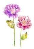 De bloem van de waterverfillustratie op eenvoudige achtergrond Stock Fotografie