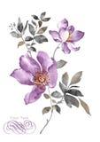 De bloem van de waterverfillustratie op eenvoudige achtergrond Royalty-vrije Stock Fotografie