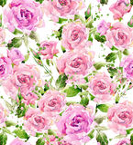 De bloem van de waterverftuin De waterverf nam illustratie toe De achtergrond van de waterverfbloem Royalty-vrije Stock Fotografie