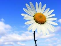 De bloem van de weide royalty-vrije stock foto