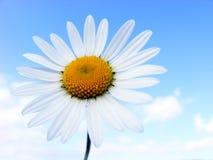 De bloem van de weide royalty-vrije stock afbeeldingen
