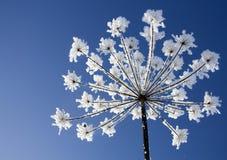 De bloem van de winter Royalty-vrije Stock Afbeelding