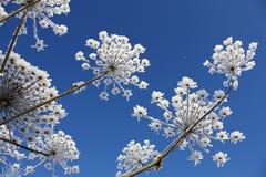 De bloem van de winter Royalty-vrije Stock Afbeeldingen